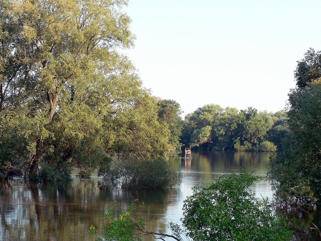 Idealer Ansitz auf Hechte und Zander - für die Räuber sind die überfluteten Wiesen jetzt das Schlaraffenland, überall bei den Büschen platscht und klatscht es...