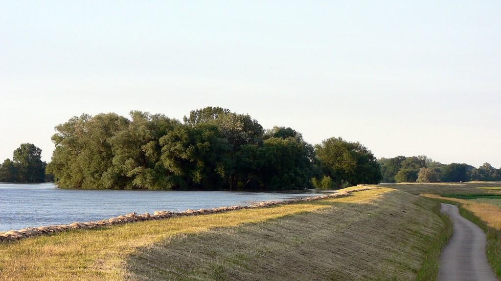 Noch ist am Deichfuß kein Qualmwasser zu sehen - hoffen wir daß es möglichst lange so bleibt.