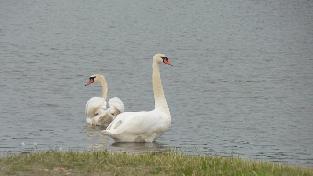 Ob den beiden das Nest weg geschwommen ist?