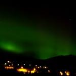 OLYMPUS DIGITAL CAMERA (Norwegen 2014 – die wilden Vierbeiner)